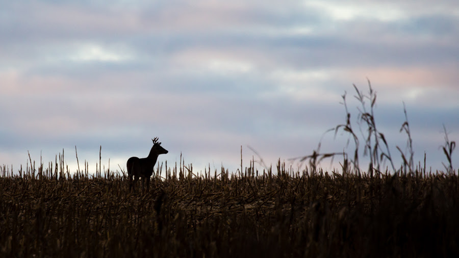 Hunters Reminded Of COVID-19 Safety Measures During Deer Season