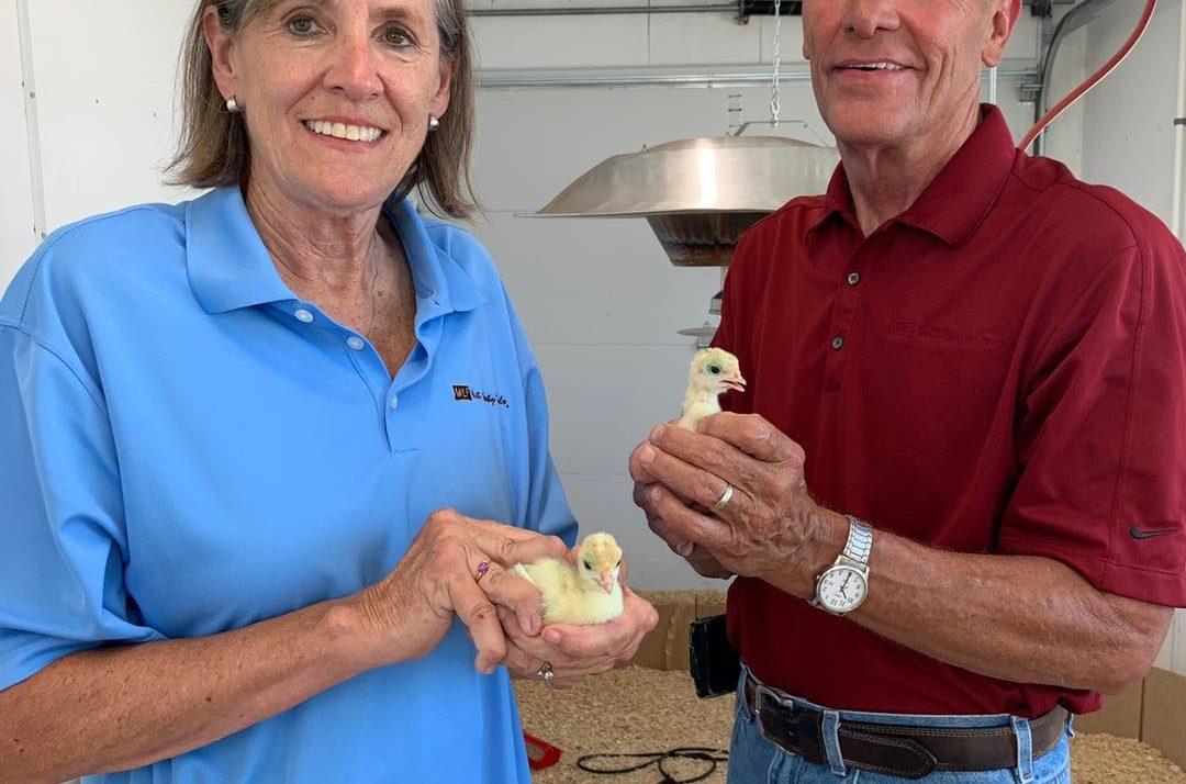 Iowa turkeys to be pardoned by President Donald Trump