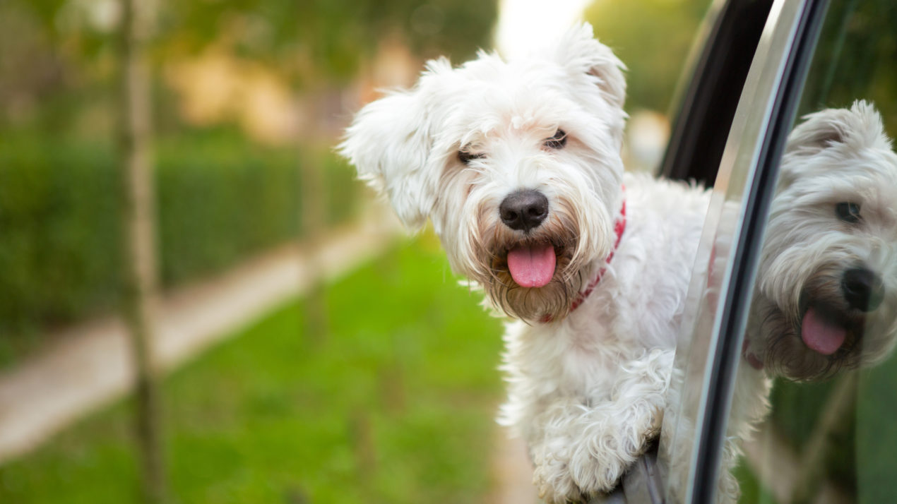 Scammers Target Unsuspecting Pet Seekers