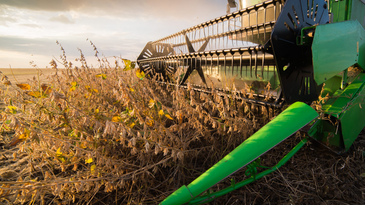 Farmer Op-Ed: Fall harvest 'couldn't have been more perfect'