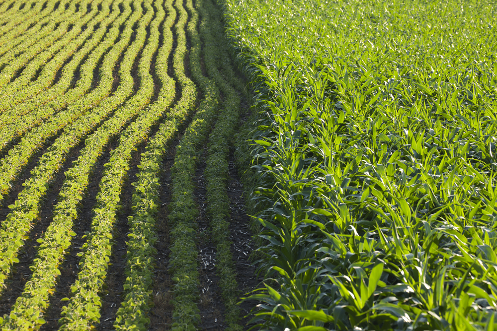 What's Your Farmland Lease Supposed To Look Like