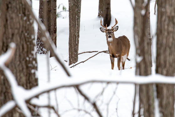 CWD Detected In Shawano County