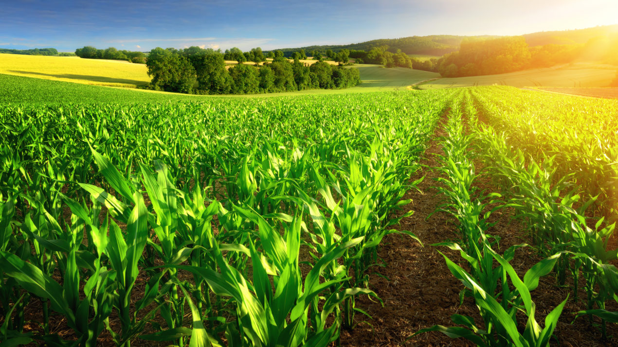 New guide sheds light on organic crop insurance options