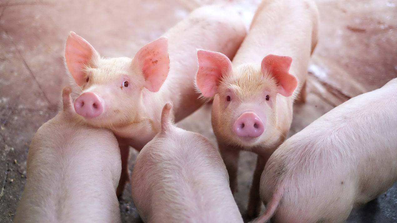 2020 Pork Exports Shatter Previous Records