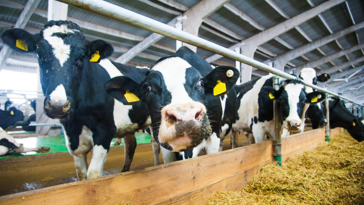NMPF Offers Dairy Farmer's Guide to Vaccine Rollout