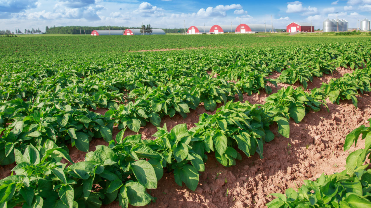Nomination Period Open for Wisconsin Potato Industry Board