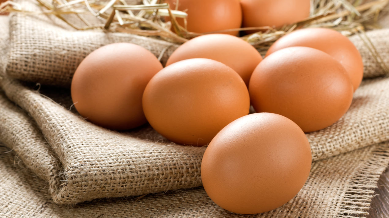 Egg production dips 8% in February