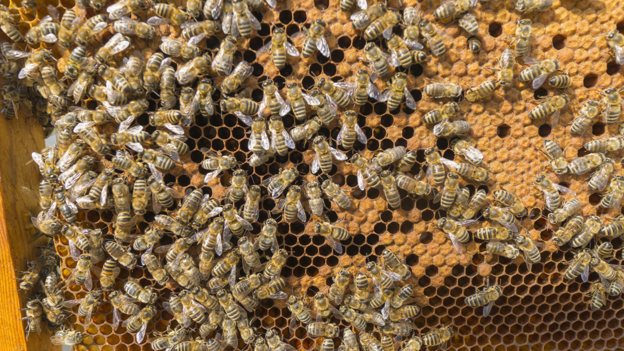 Wisconsin honey producers keep buzzing along