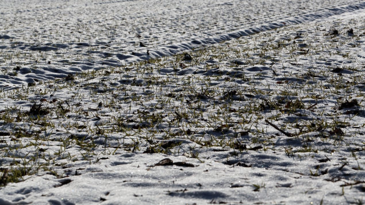 Tough To Plant With Snow Flurries