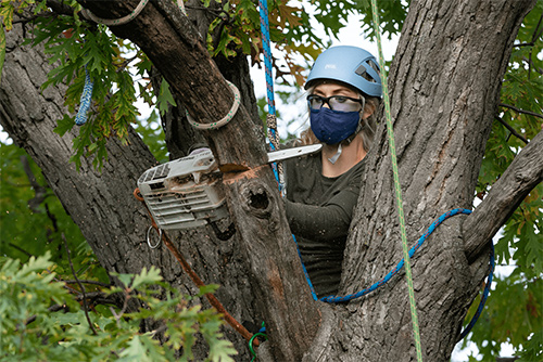 Arborists – An Employment Area