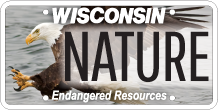 endangered resources license plate with image of bald eagle