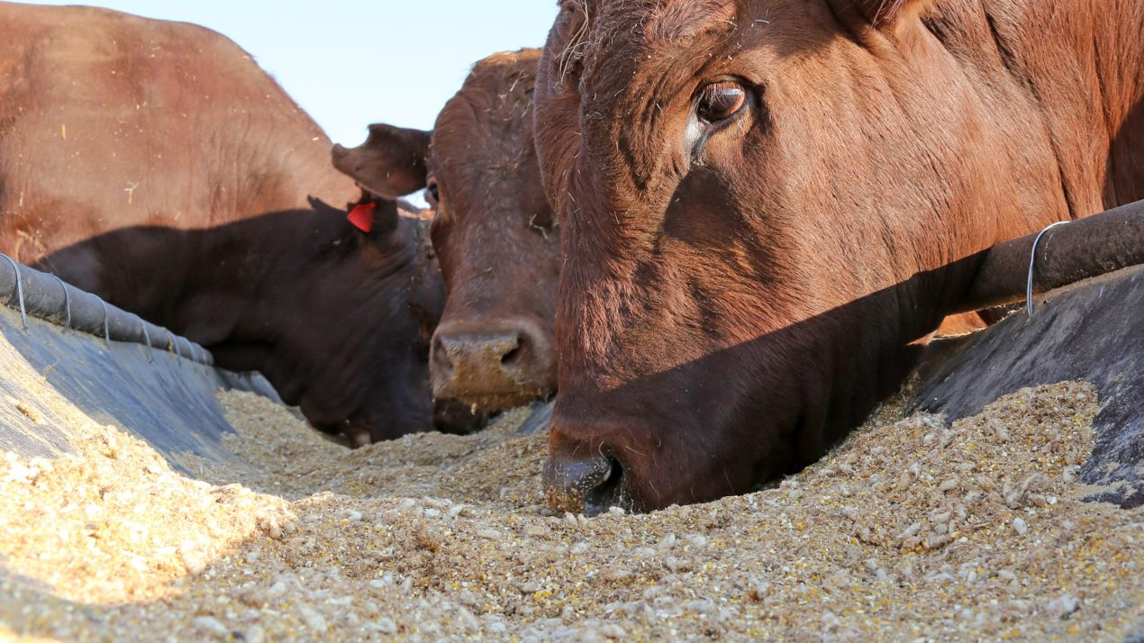 Livestock feed prices respond to the pressure of rising commodity markets