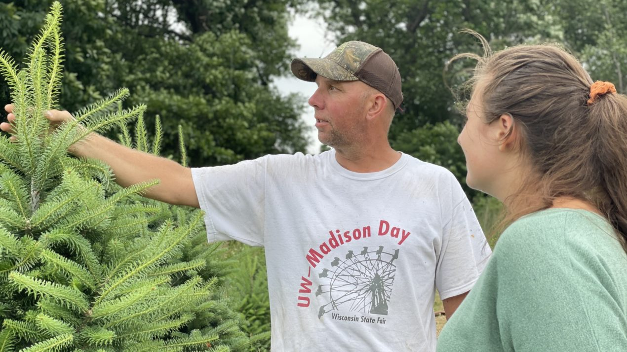 Christmas In June For Tree Farmers