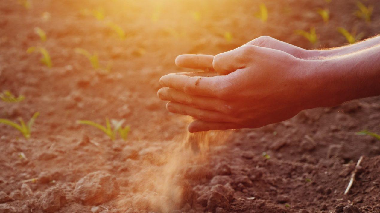 Crop Condition Declines
