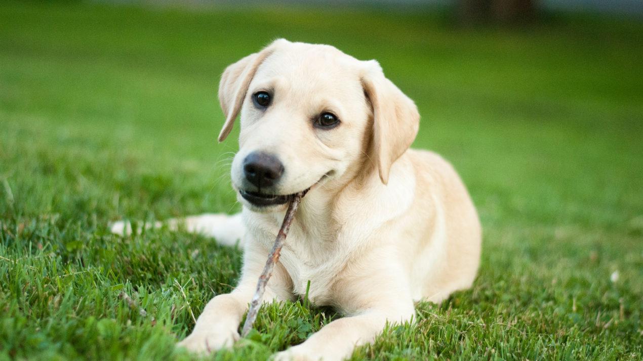 Dog Sellers Program Celebrates 10 Years
