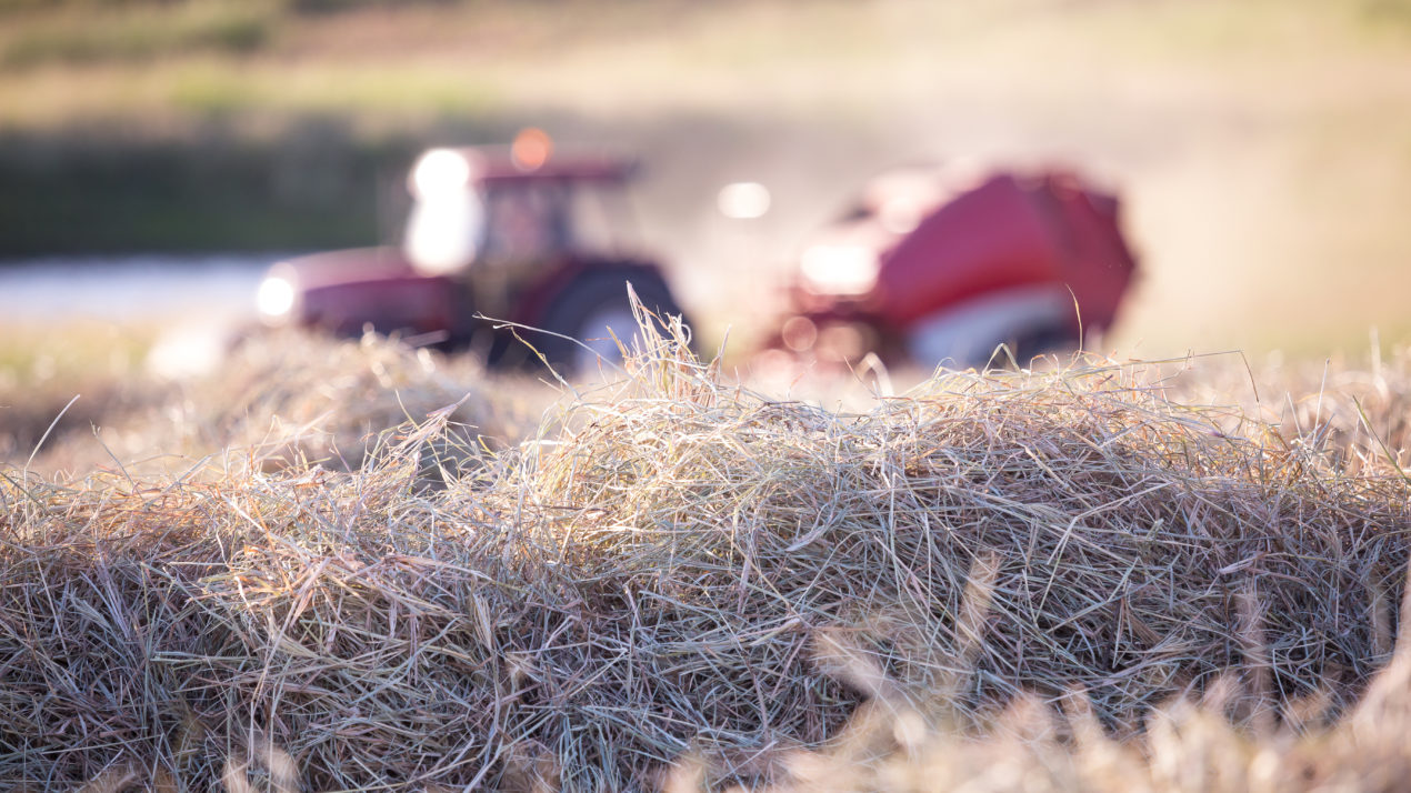 Hay Price Spread Widens