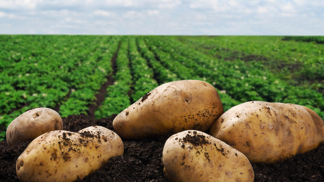 Potato Industry Elects New Leaders