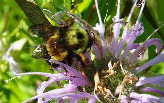 Bee Population Falling