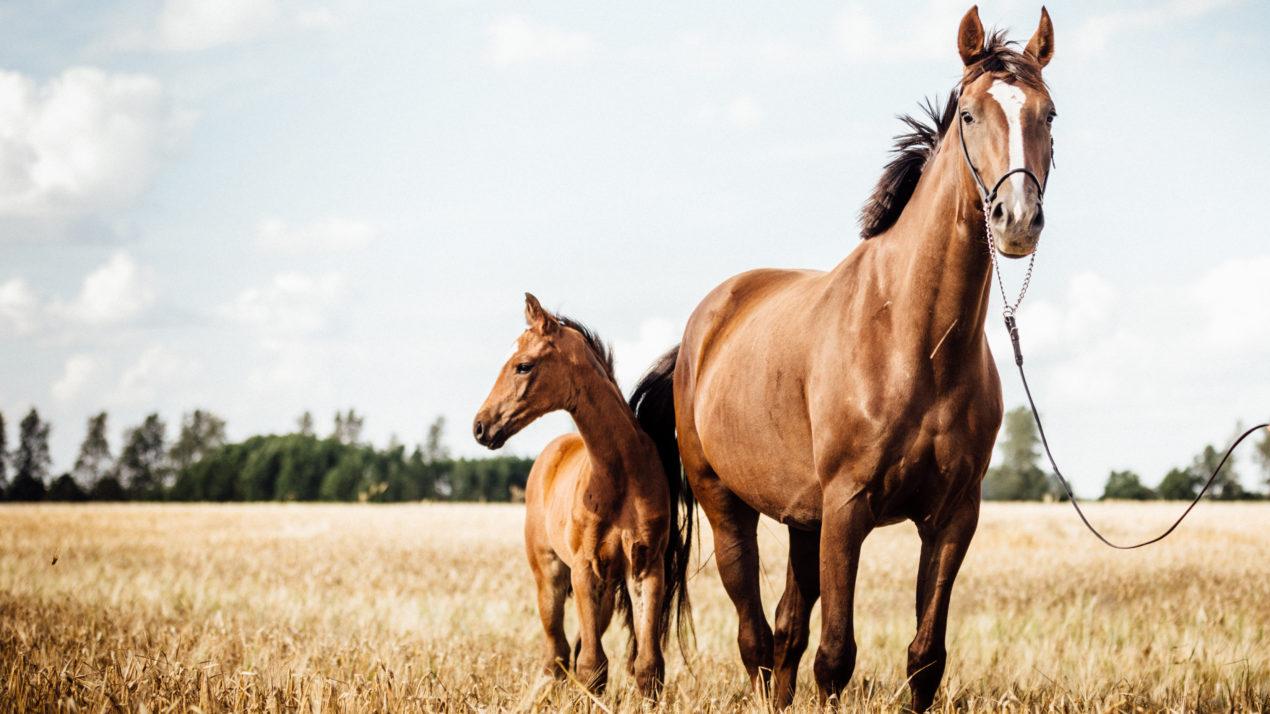 EEE Confirmed In Monroe County Horse