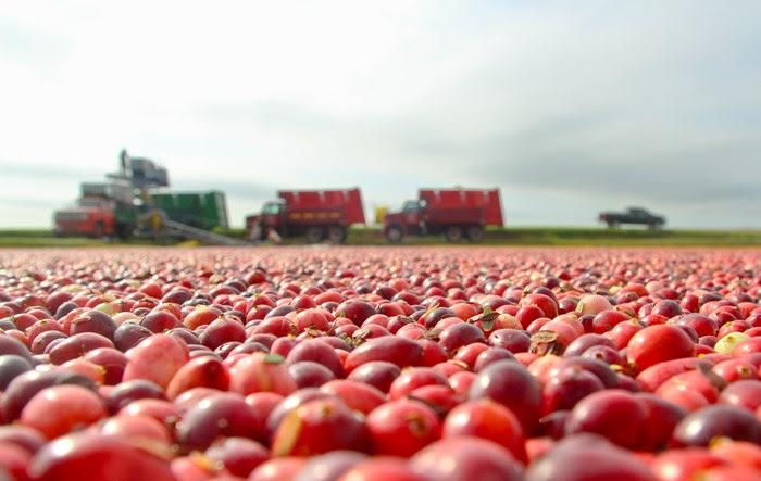 Attend The Cranberry Jamboree