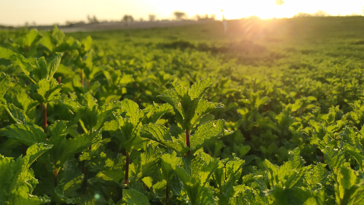 Deadline Approaches For Crop Insurance