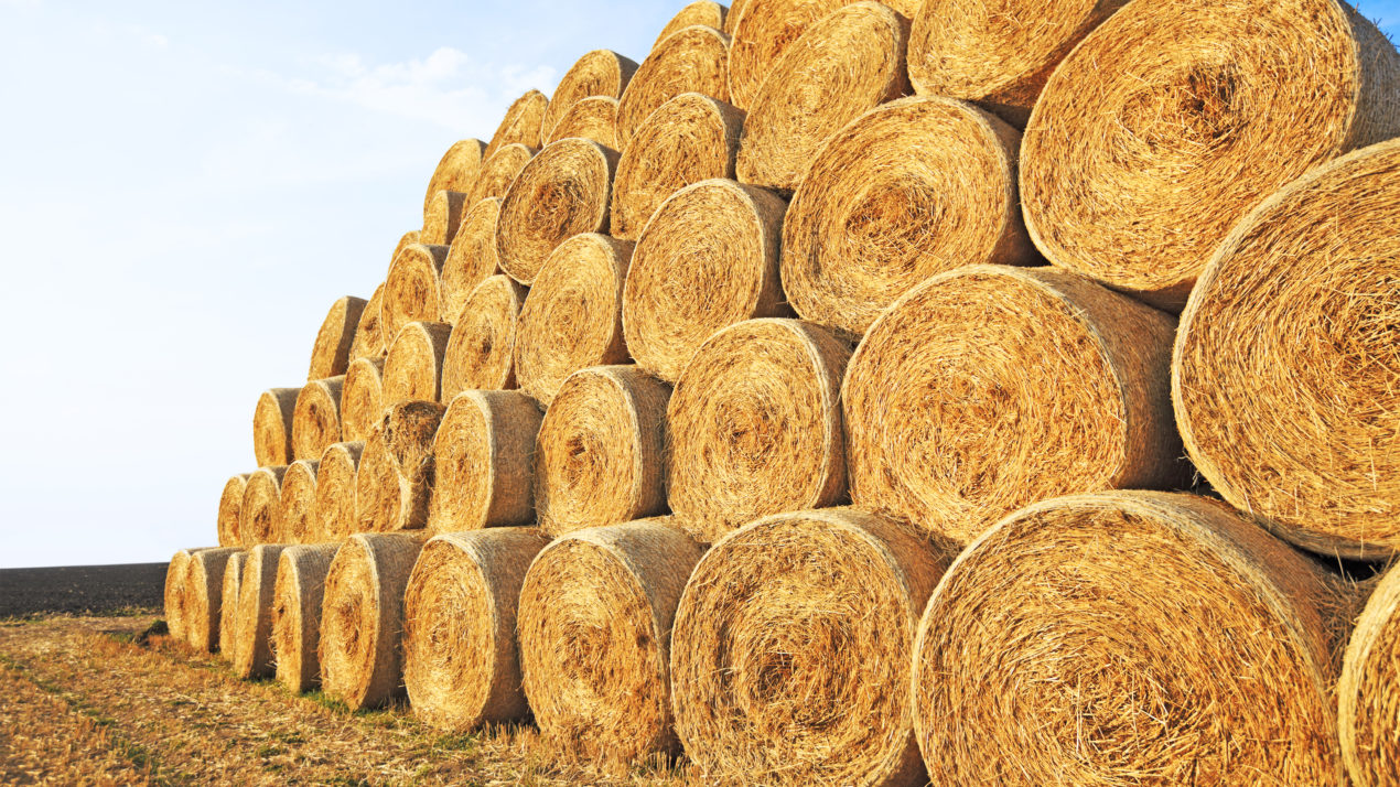 Hay Supply Favorable In Wisconsin